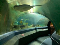 Aquariumtunnel im National Aquarium
